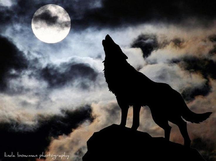 Значение тату воющий волк: смысл, история и фото готовых тату